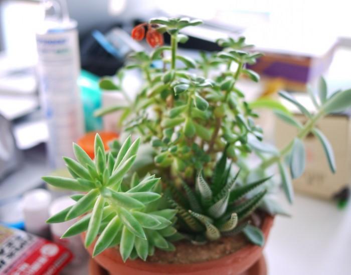 image-plant